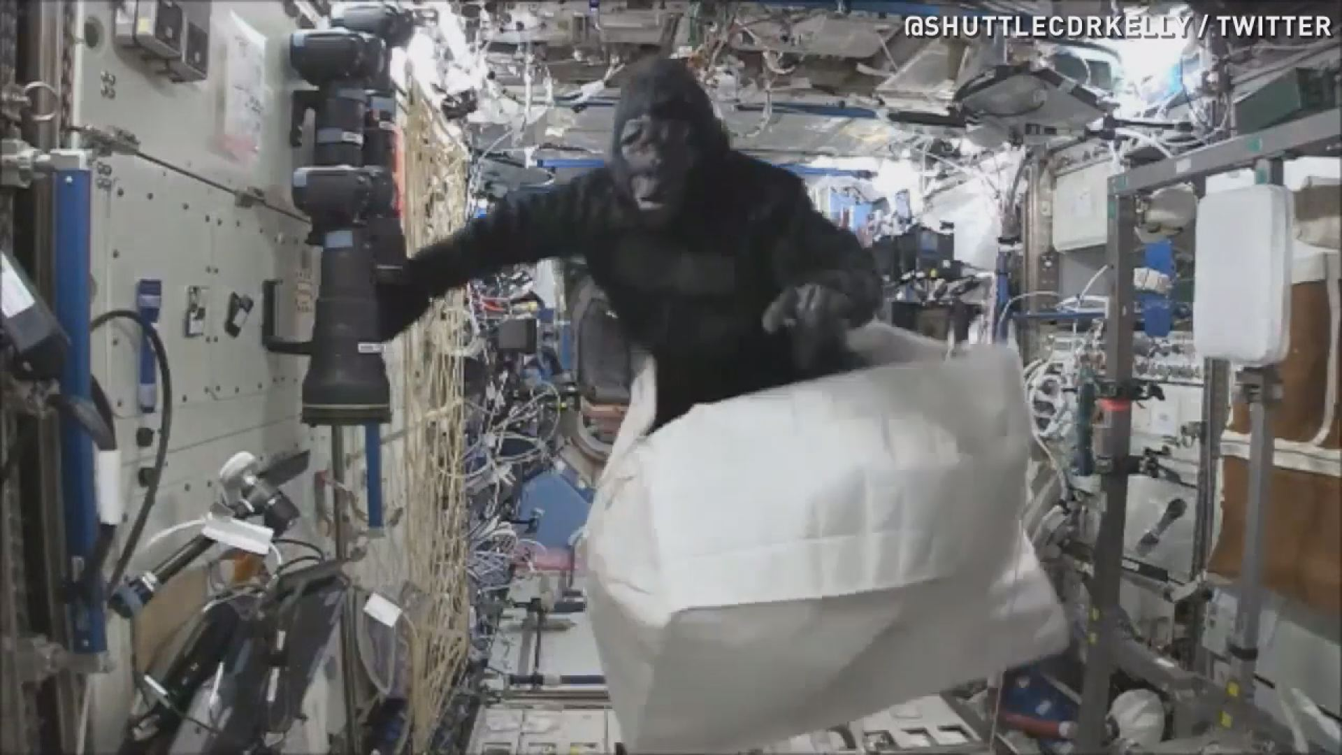 Watch monkey business in outer space for Jobs in outer space