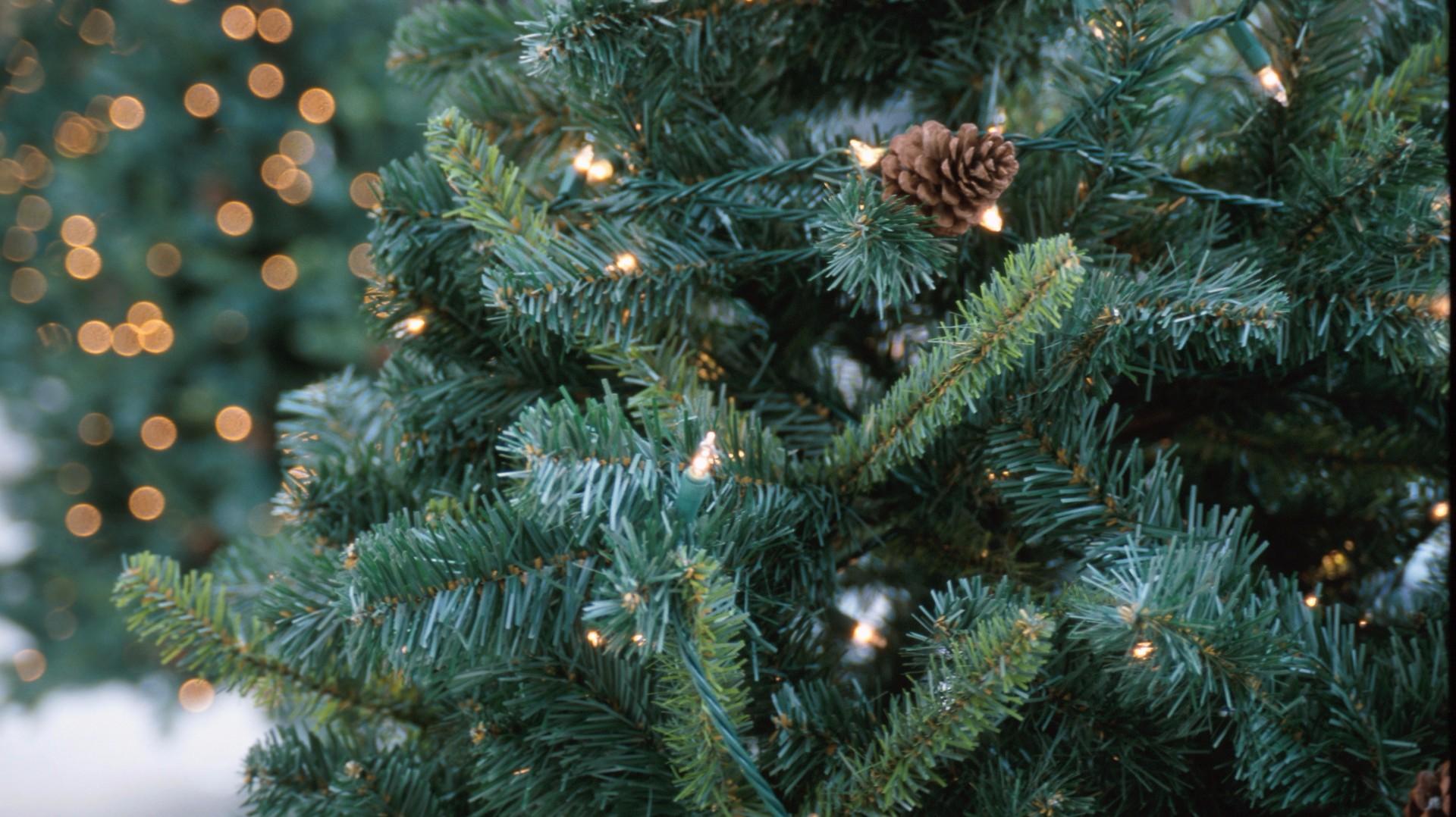 Prescott National Forest Christmas Tree Permits 2021 Thousands Buy Permits In Arizona To Cut Down Christmas Trees 12news Com