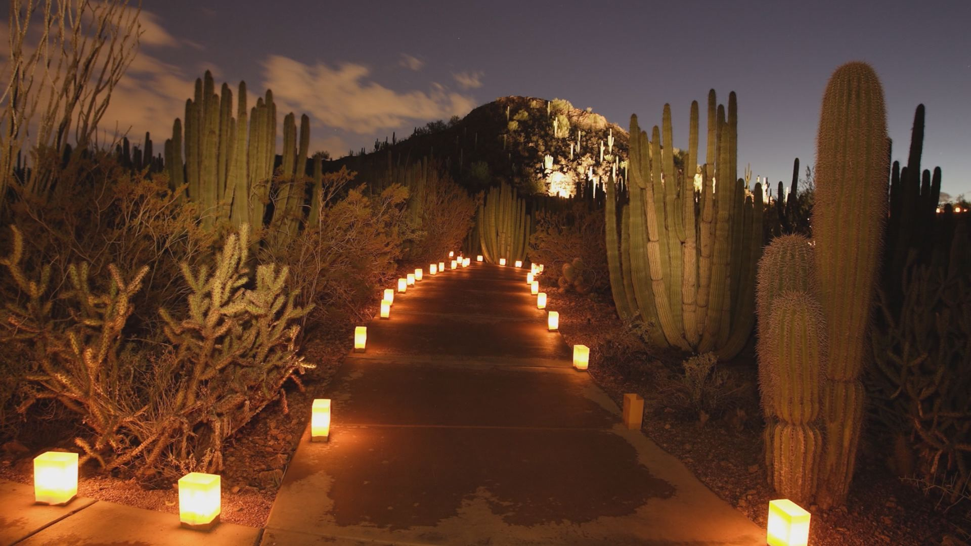 12news.com | 10 Things You Didnu0027t Know About Las Luminarias At Desert  Botanical Garden