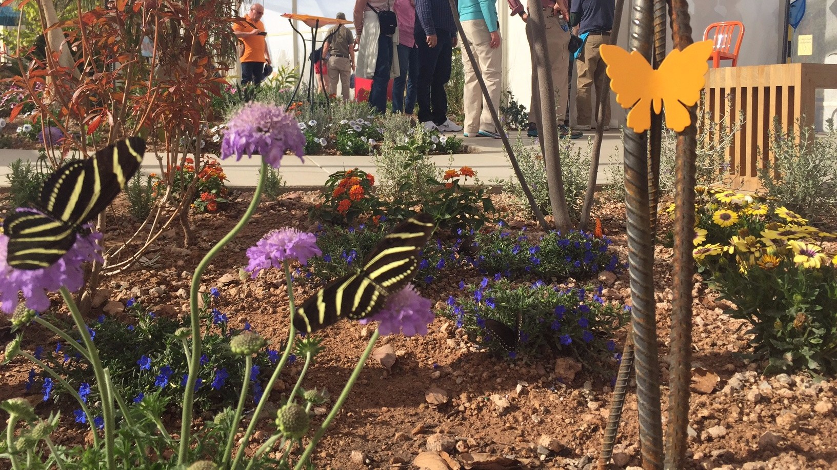 Check Out The New Spring Butterfly Exhibit At