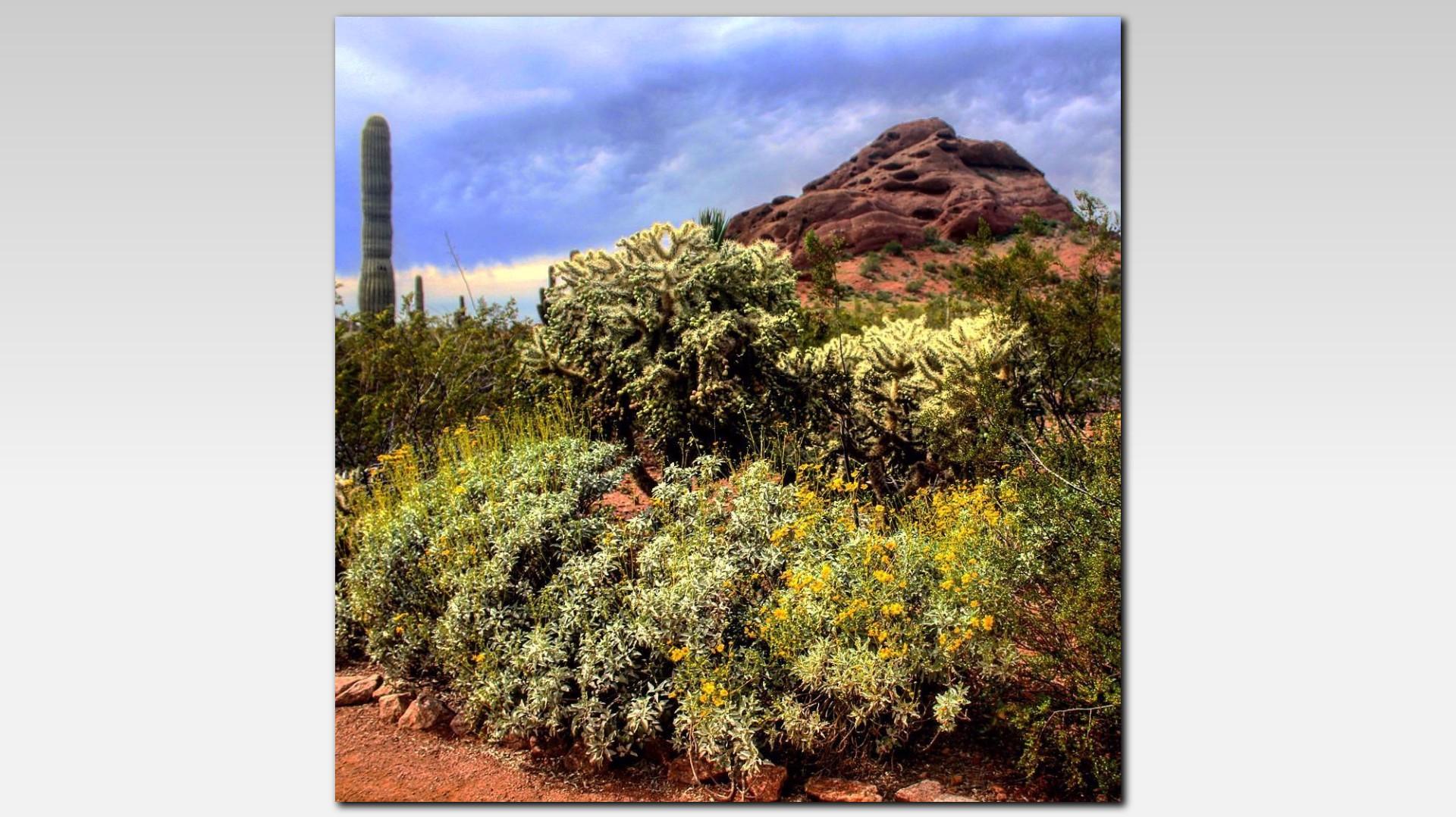 Desert Botanical Garden Named One Of The Best