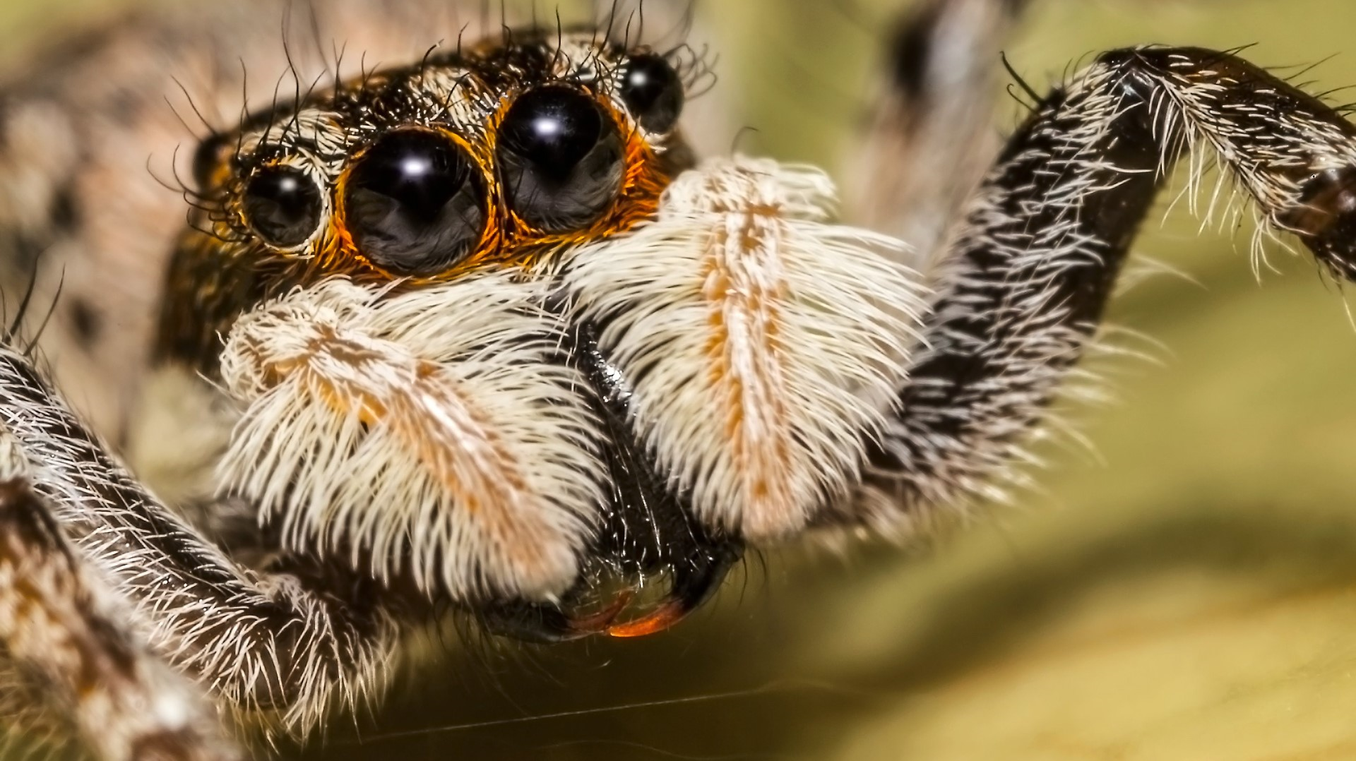 Earthquake Tracker San Diego >> kgw.com | New 'softball-sized' spider species found in Baja California caves