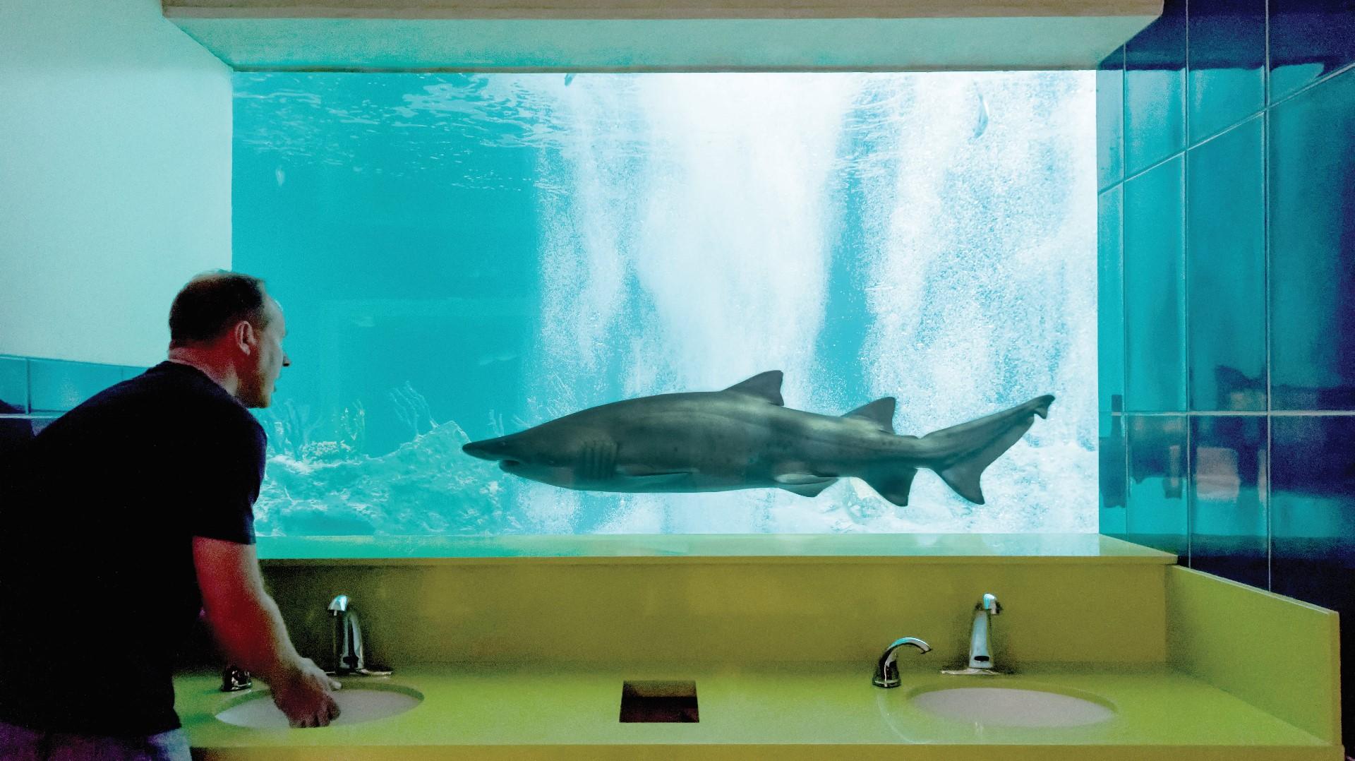 Scottsdale s OdySea Aquarium has the best bathroom in America  company says    12NEWS com. Scottsdale s OdySea Aquarium has the best bathroom in America